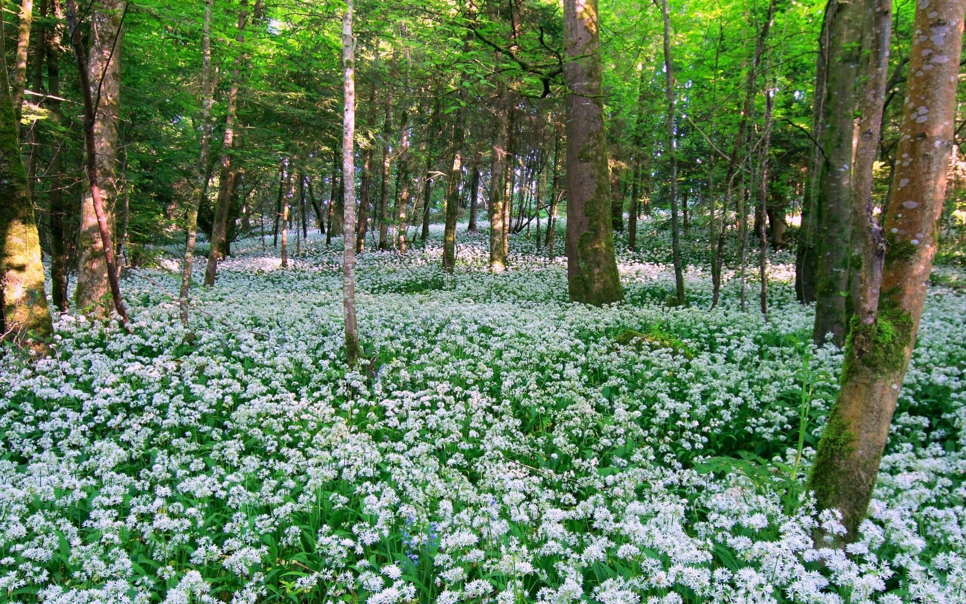 Фото цветов леса